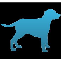 Dog Temporary Tattoo