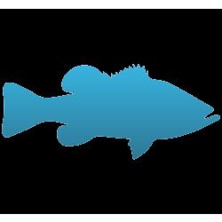 Largemouth Bass Temporary Tattoo