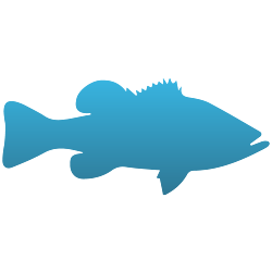 Large Mouth Bass Decals