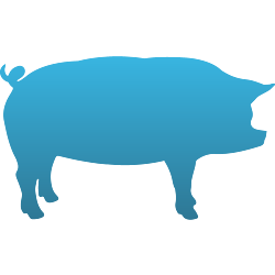 Pig Temporary Tattoo