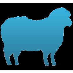 Sheep Temporary Tattoo