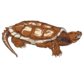 Common Snapping Turtle Static Cling